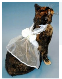 cat wedding dress