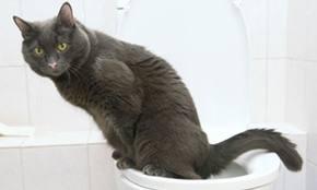 cat.toilet